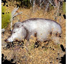 Eurasian Boar Decoy Target Bloodline